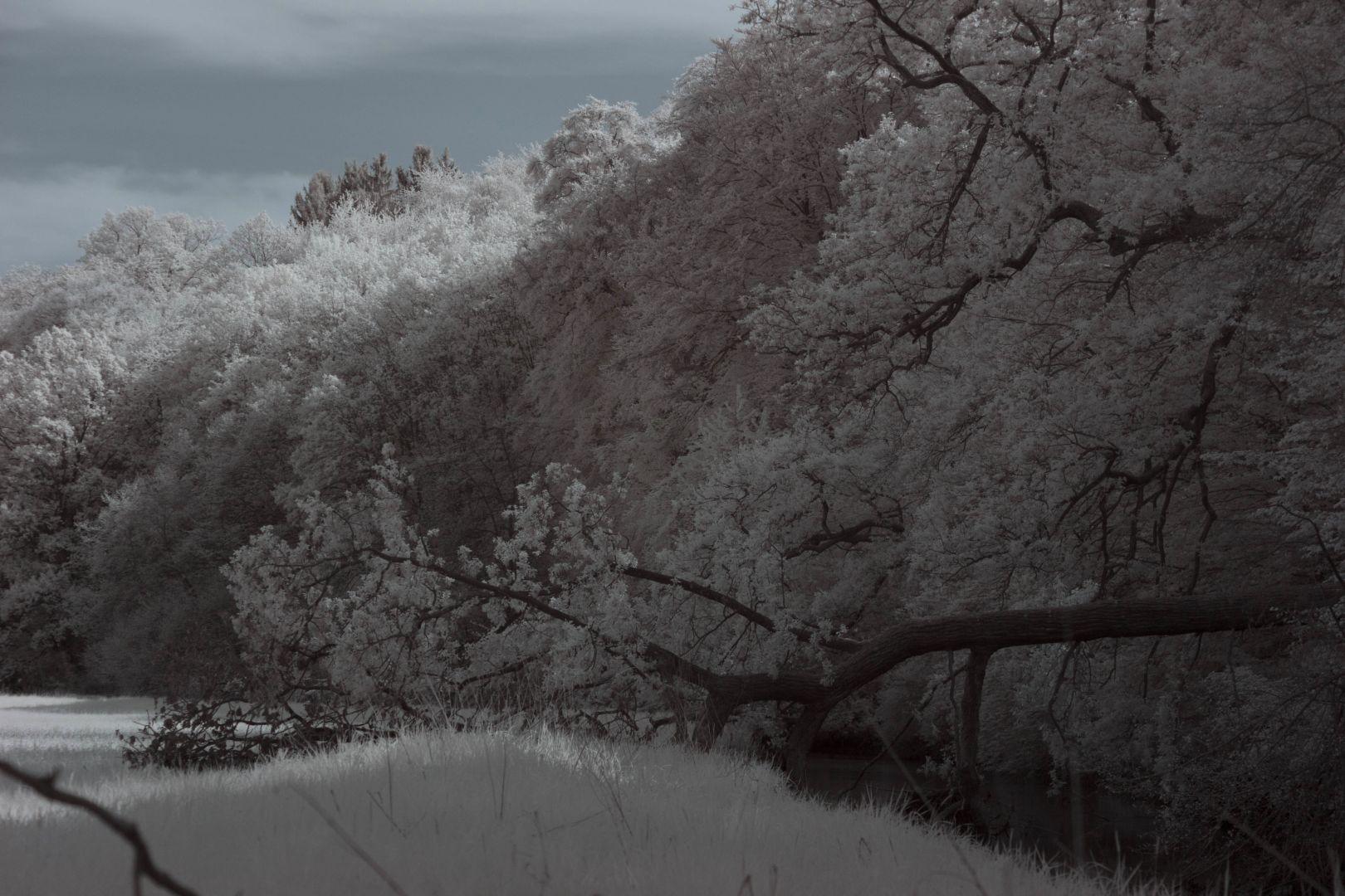 An der Nidder in den Bornwiesen