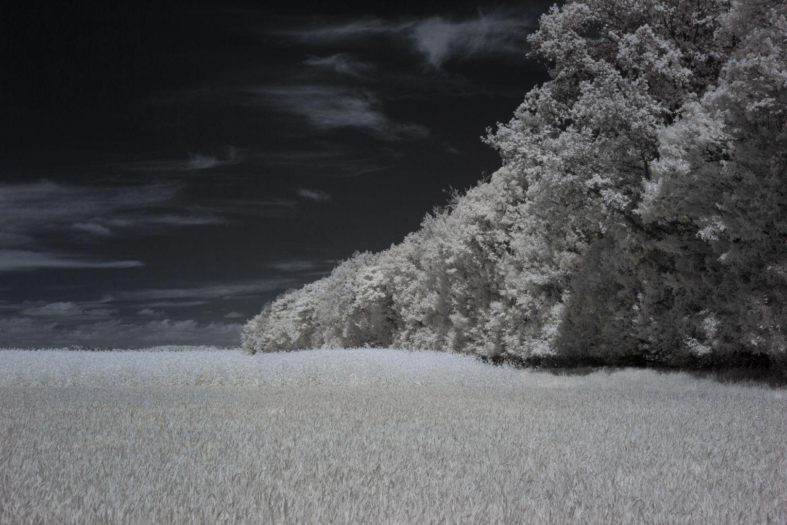 Baumreihe vorm Vereinsheim - Infrarot
