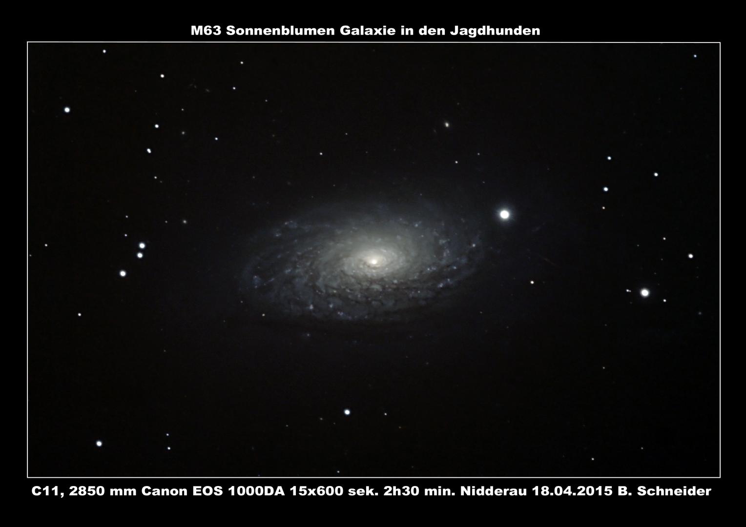 Sonnenblumen Galaxie M63